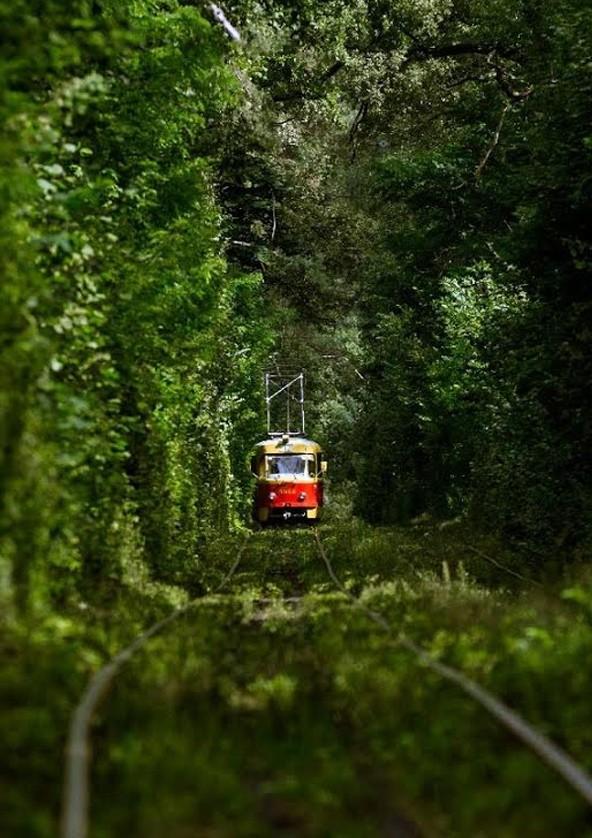 Билеты Прогулка на трамвайчике в Пущу - Водицу